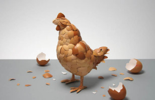 What Came First? Chickens Made of Eggs, Duh!