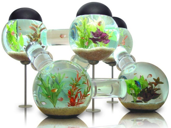 Every Fish's Fantasy, The Labyrinth Aquarium
