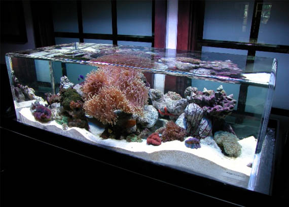 , Nano Aquarium, Ideas Para, Edge Aquascape, Aquascapes Aquariums ...