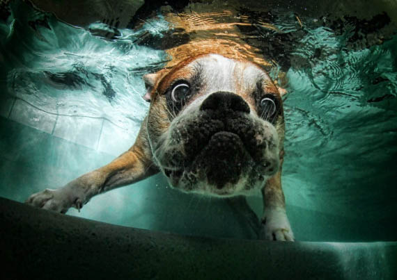 Underwater Dog Photography Incredible Things