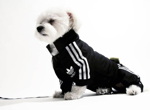 Adidas Track Suit For Your Pooch | Incredible Things