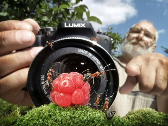 Amazing Ant Photography