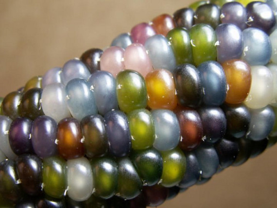 Glass Gem Corn Is Cray-Cray