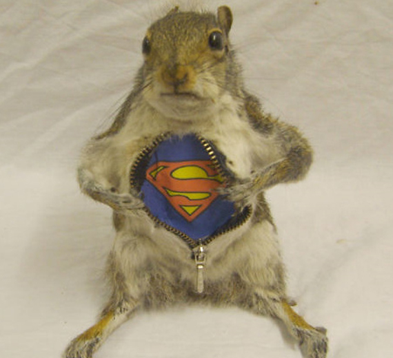 Taxidermy Gone Wild
