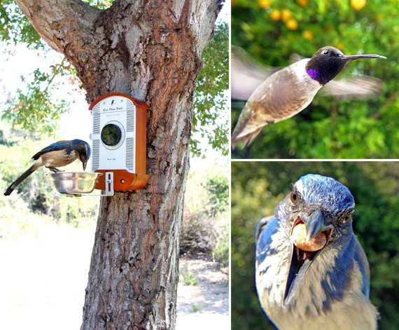 Bird Photo Booth Lets You Bird Watch From Your Couch