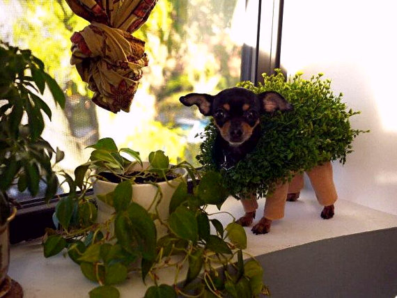 Ch-Ch-Ch-Chia Pet Costume For Your Pet