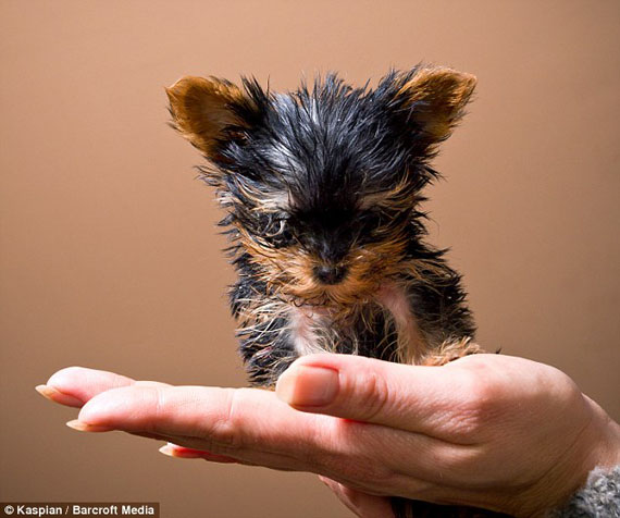 TOP 10 CUTEST DOG BREEDS IN THE WORLD - YouTube |The Most Smallest Dog In The World