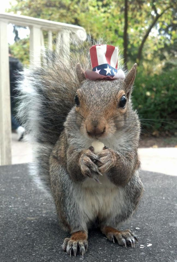 Sneezy The Squirrel Wearing Hats Incredible Things