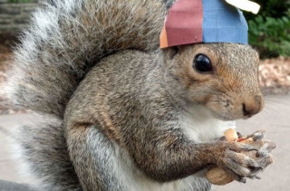 Sneezy The Squirrel, Wearing Hats