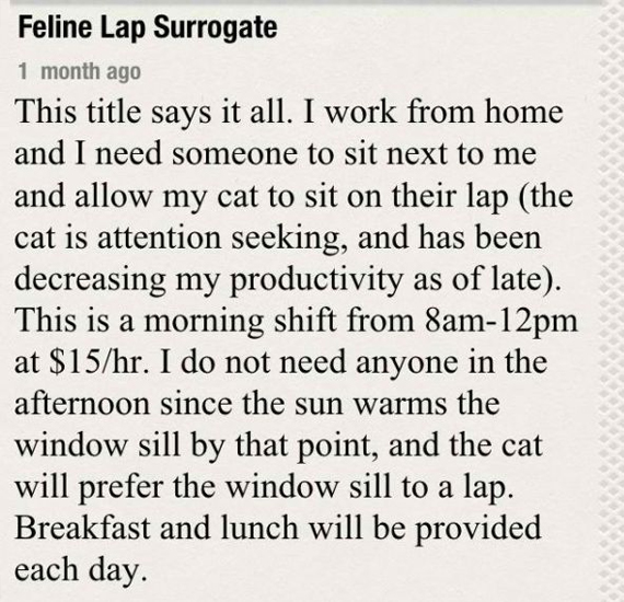 Help Wanted: Feline Lap Surrogate