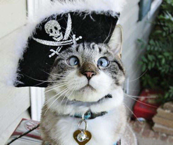 Cross-Eyed Cat Likes To Dress Up