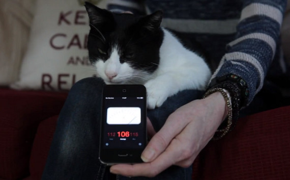 Is This Cat The World's Loudest Purrer?