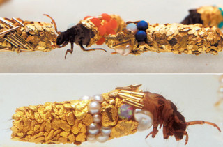 French Artist Tricks Bugs Into Making Gold Sculptures