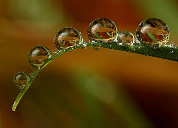 macro-dew-drop-photography-10