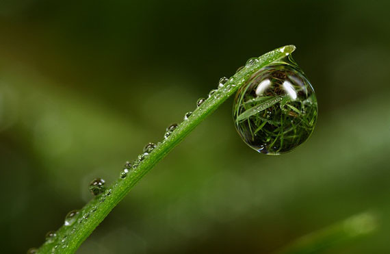 macro-dew-drop-photography-3
