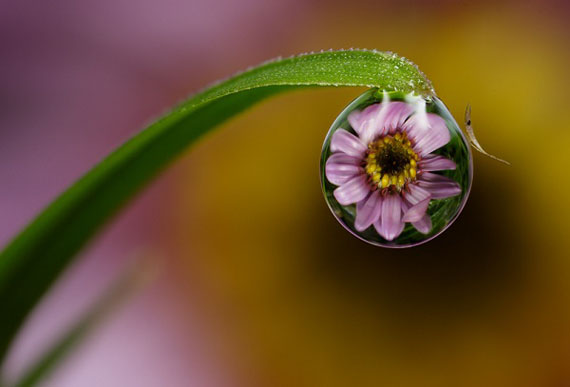 macro-dew-drop-photography-8