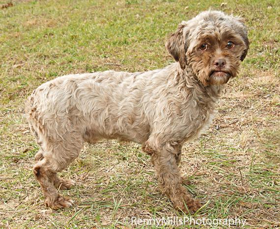tonik-human-face-dog2