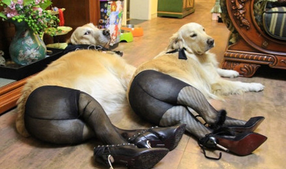 WTF/Why?: Dogs Wearing Pantyhose