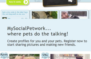 Social Media For Pets, Duh