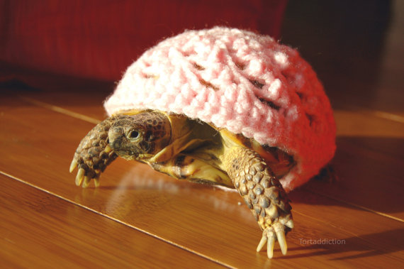 Knitting Pattern For Tortoise Jumper : Sweaters Made Just For A Turtle Or Tortoise Incredible Things