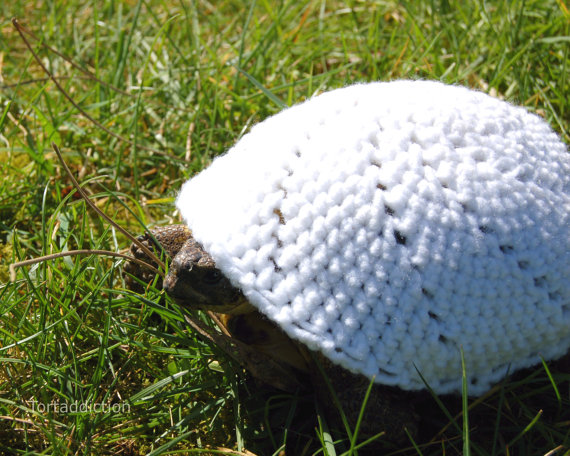 turtle-and-tortoise-sweater-2