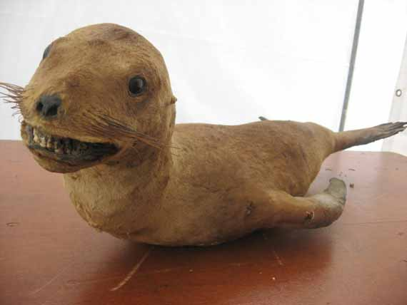 creepy-taxidermy-11