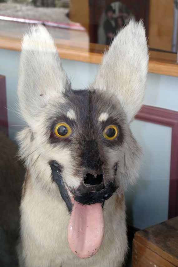 creepy-taxidermy-4