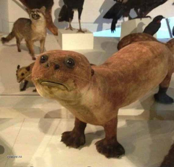 creepy-taxidermy-7