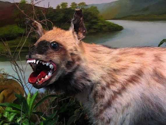 creepy-taxidermy-9