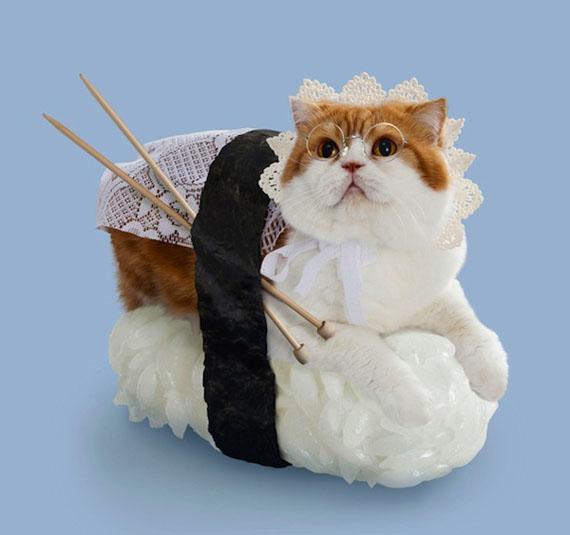sushi-cats-4