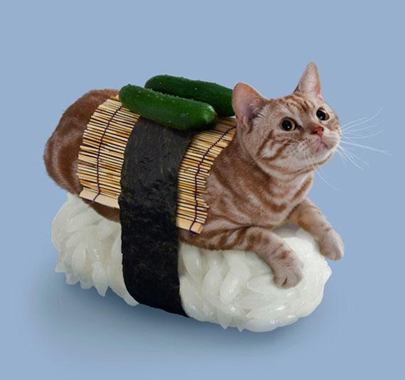 sushi-cats-5