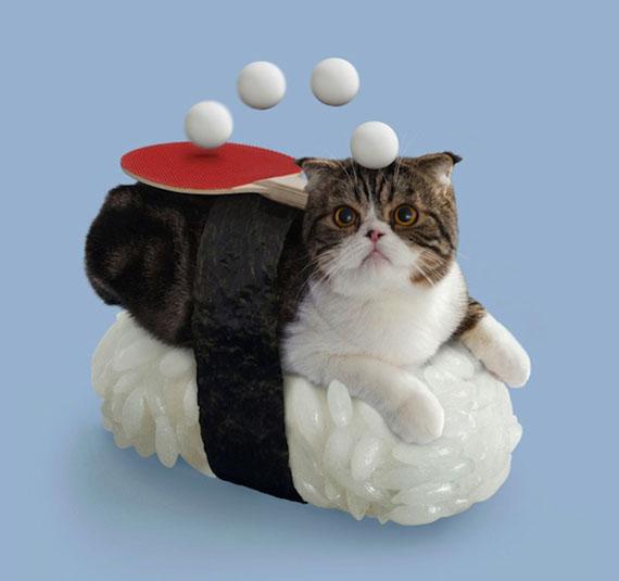 sushi-cats-7