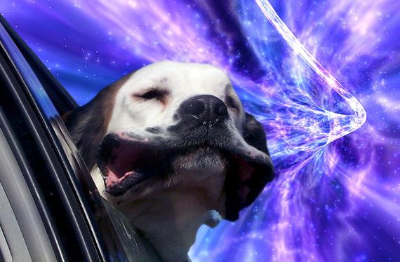 Warp-Dogs-2