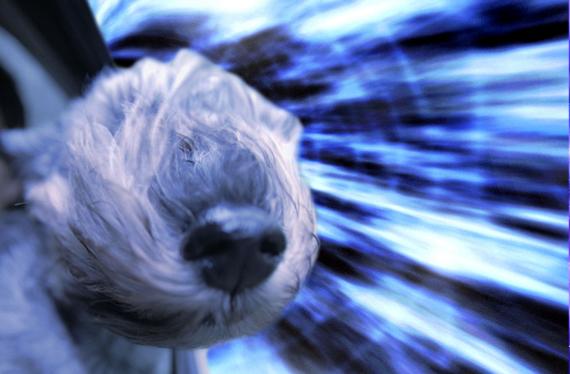 Warp-Dogs-3