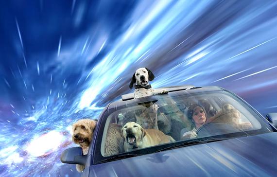Warp-Dogs-4