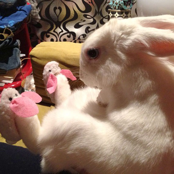 A Bunny... Wearing Bunny Slippers