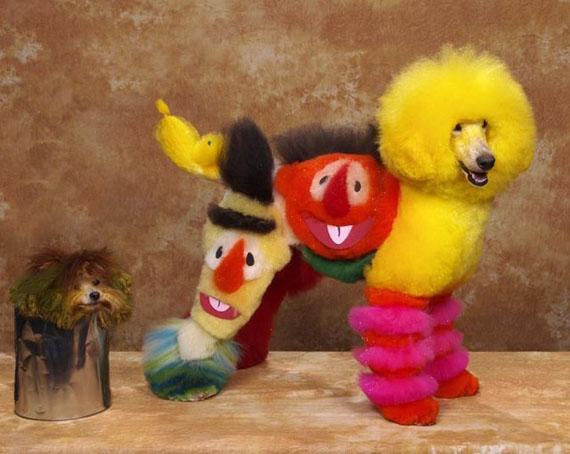 dogs-hair-dye-characters-6