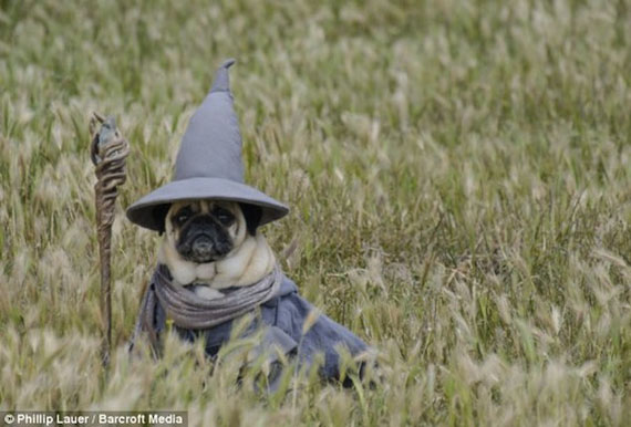 pugs dressed up as lotr characters incredible things