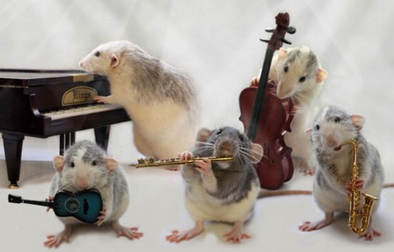 "ORKESTRI MUZIKOR "" DIDI"" Rat-playing-musical-instruments-6"
