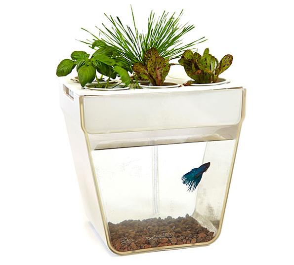 A self cleaning fish tank slash garden incredible things for Self cleaning fish tank