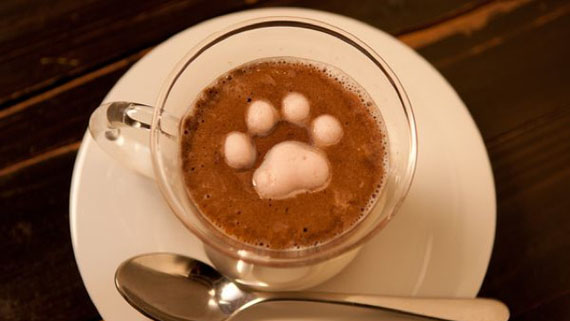 Fake Latte Art With Kitty Marshmallows Incredible Things