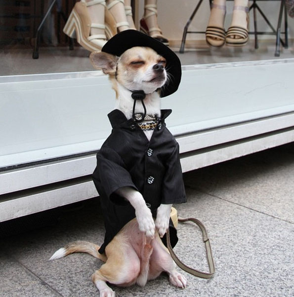 best-dressed-dog-5
