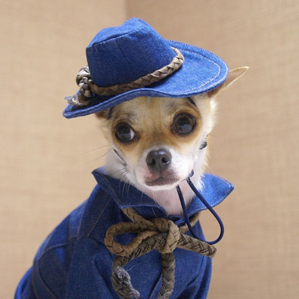 best-dressed-dog-6