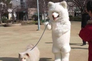 Caption This: Dog Walking Dog (WIN STUFF)