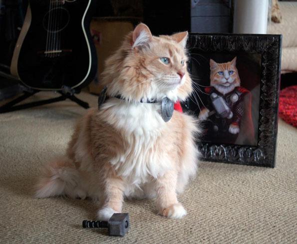 cat-dressed-like-thor-2