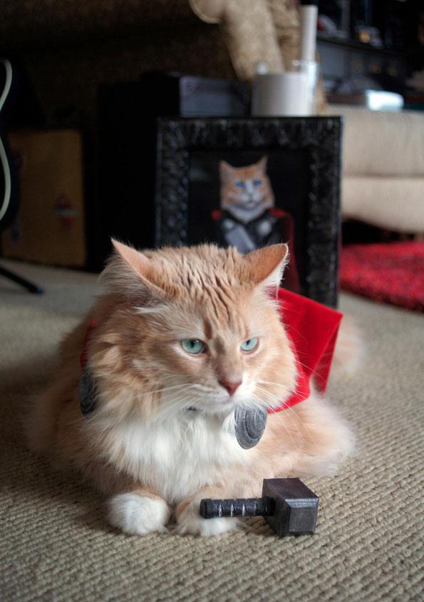 cat-dressed-like-thor-3