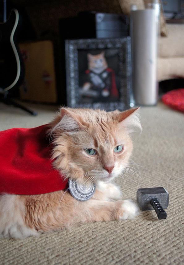 cat-dressed-like-thor-4