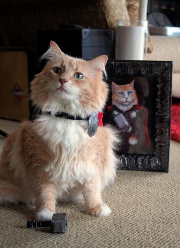 cat-dressed-like-thor-5