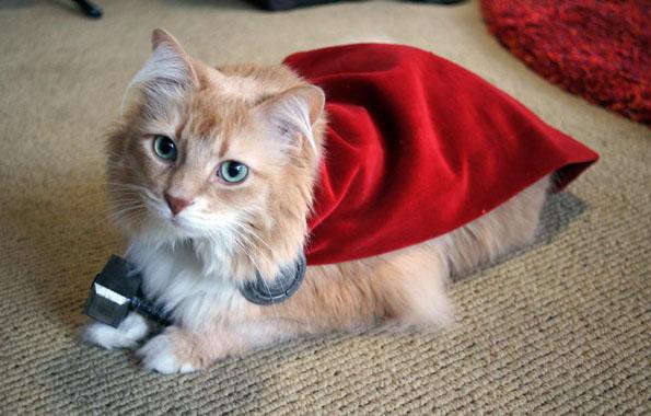 cat-dressed-like-thor-6
