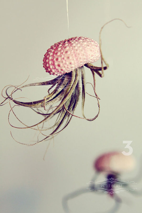 hanging-jellyfish-plants-2